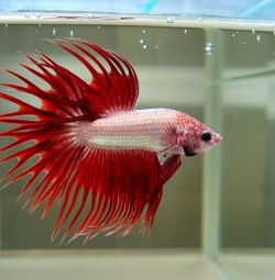 Ψάρια ενυδρείου