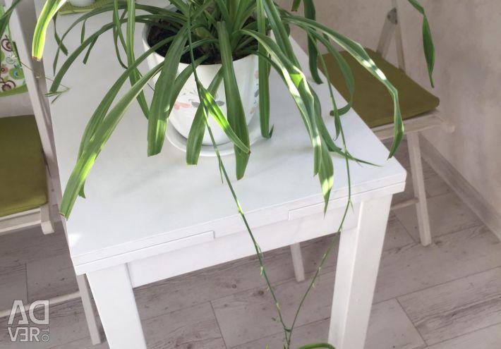 Mexican cactus, sansevieria, syngonium, chlorophytum