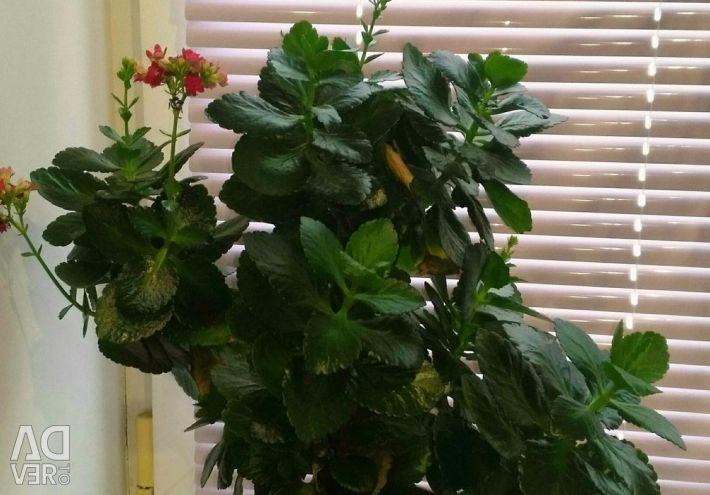 Indoor plant.