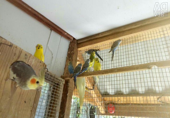 Sale of parrots