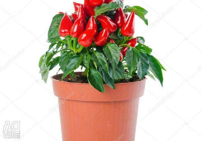 Pepper in the pot.