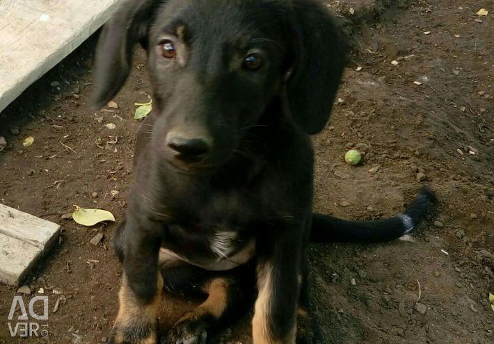 We distribute puppies in good hands