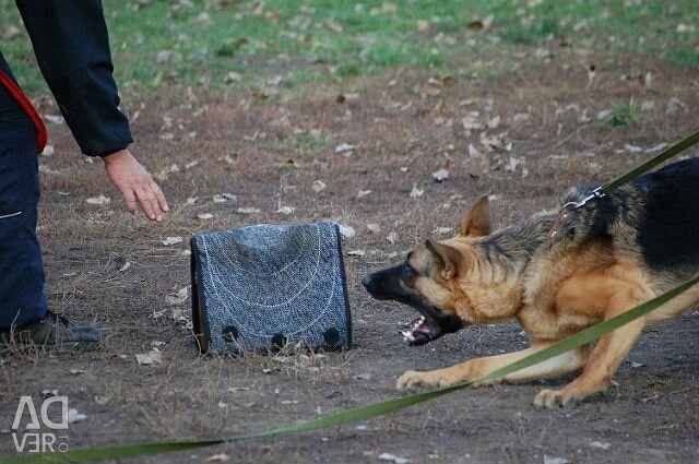 Dog training Saratov, Engels