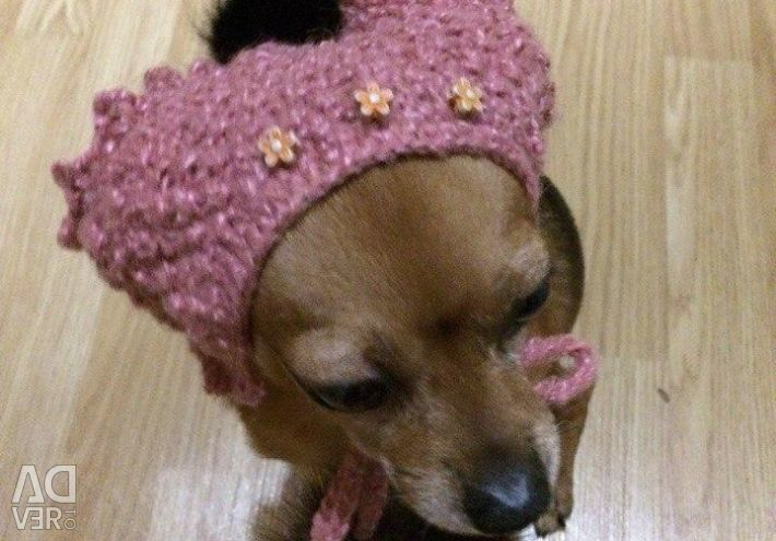 Hat for a small breed of dog