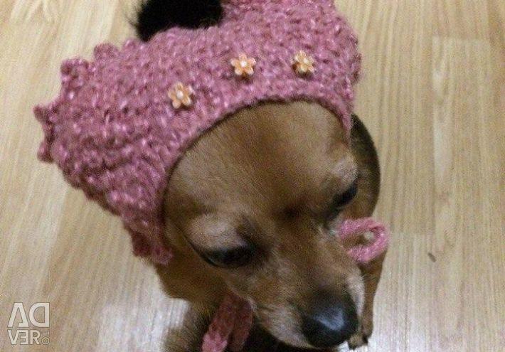 Шапочка для маленькой породы собак