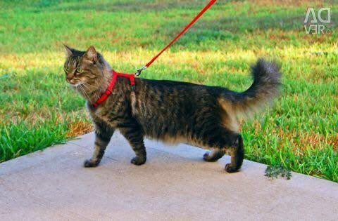 Οδηγός Γάτας Cat / Harness