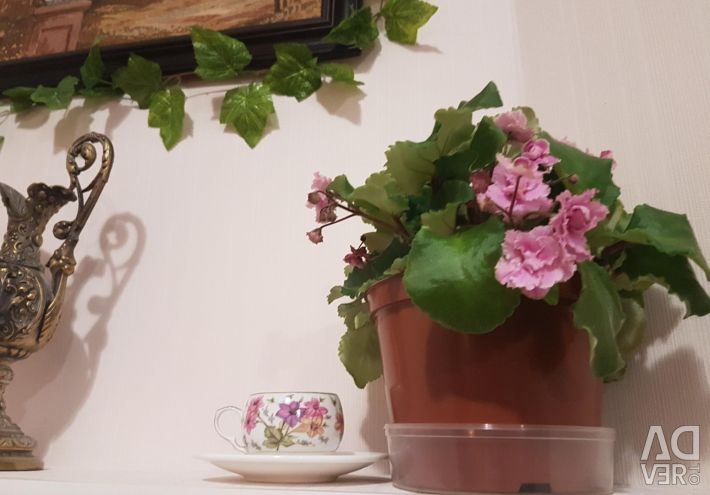 Senpia trailer (violet)