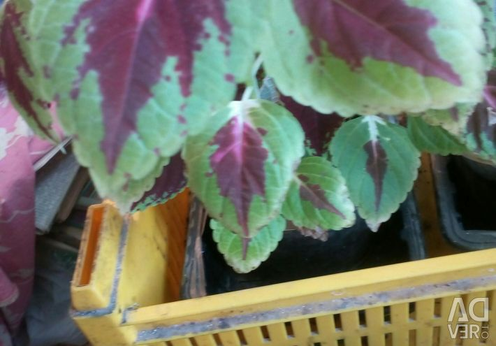 Indoor flowers, different, beautiful, Netting colored, f