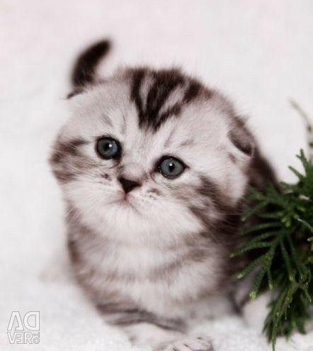 Marble Kitten