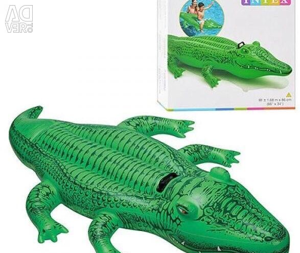 Crocodile for oxen