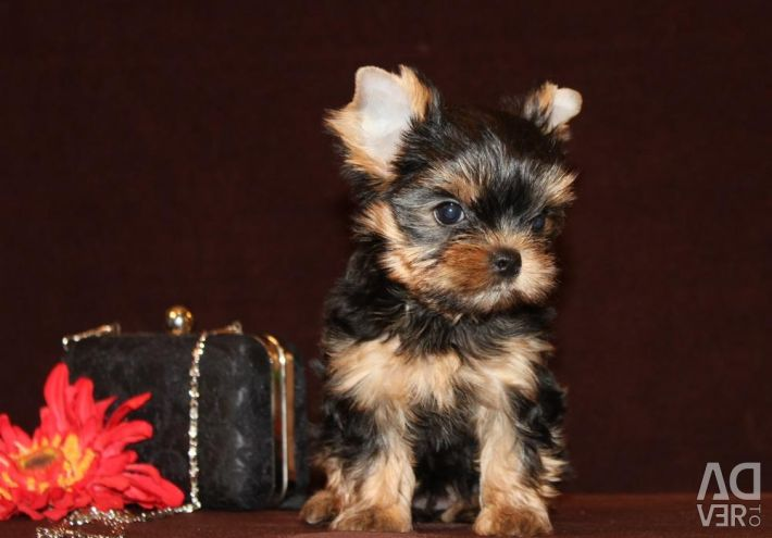 Yorkshire Terrier Barbie Mini Girl