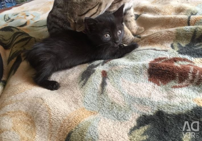 Kitten in good hands
