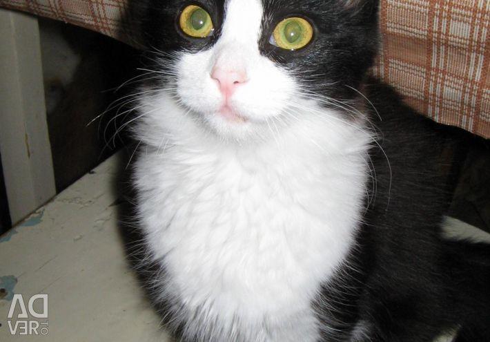 Котята разного возраста и окраса