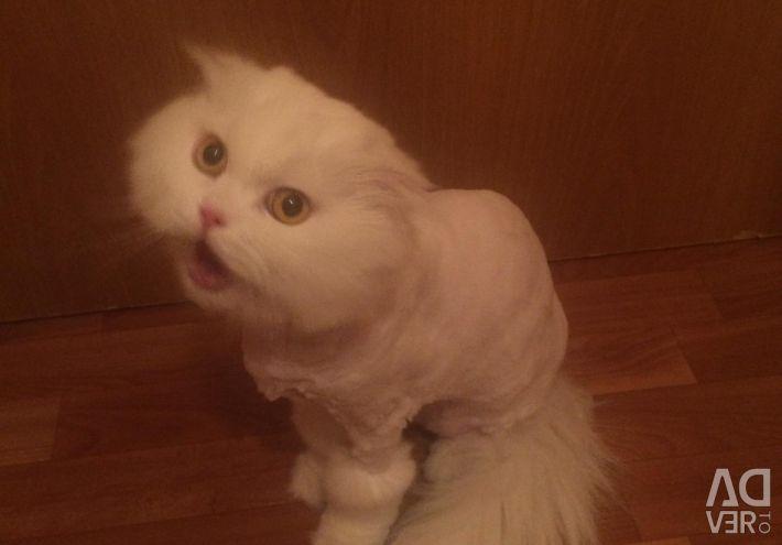 Damat tımar kediler tımar kediler ucuz