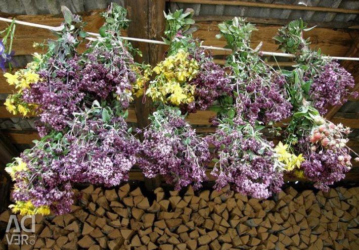 Oregano (oregano) dried herbs