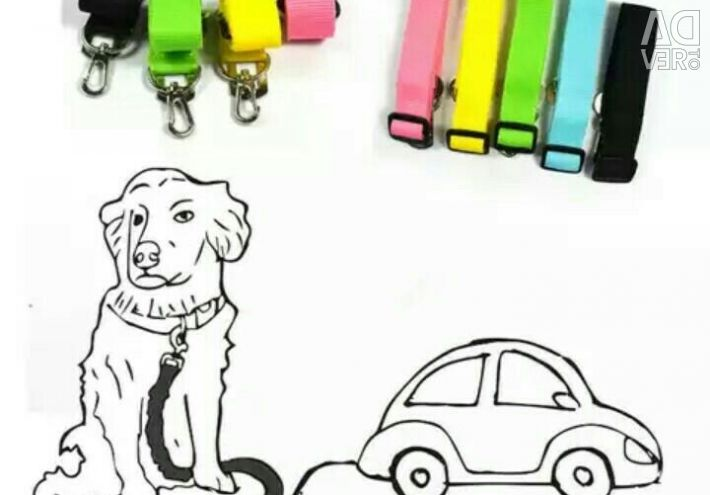 Car leash