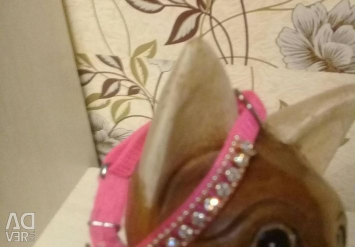 Collar for animals with rhinestones and bells