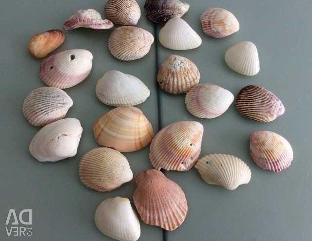 Shells for aquarium decor. Exchange.