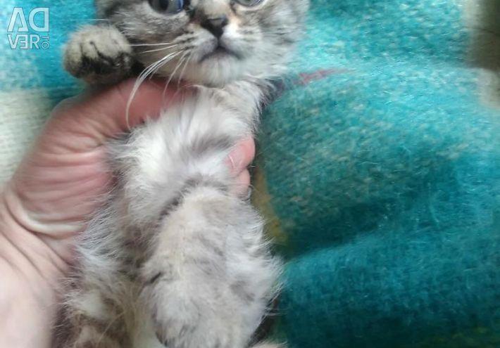 Kittens Whiskas