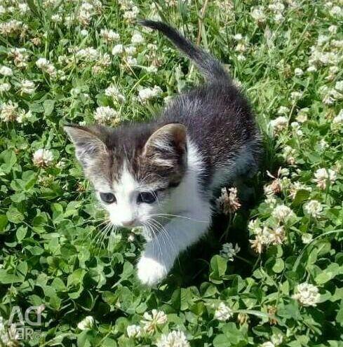 Kitten σε καλά χέρια