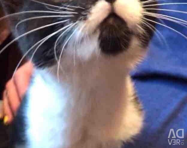 Μαύρο και άσπρο γατάκι ως δώρο