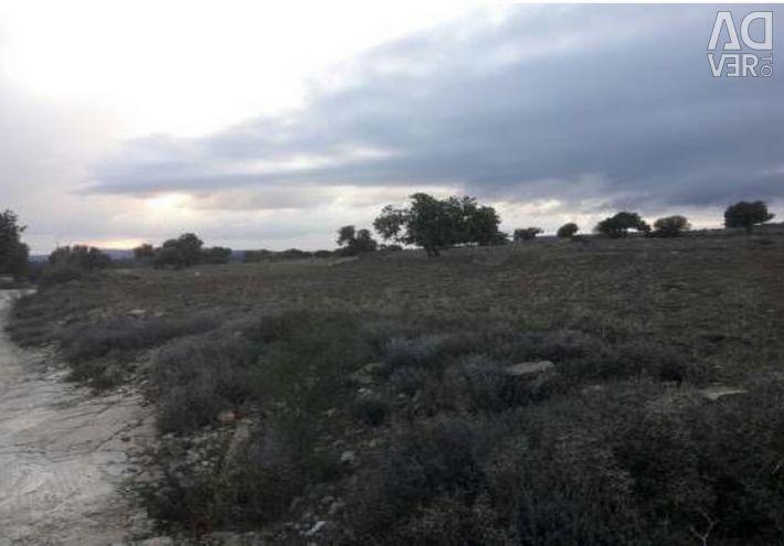 Field in Pachna, Limassol