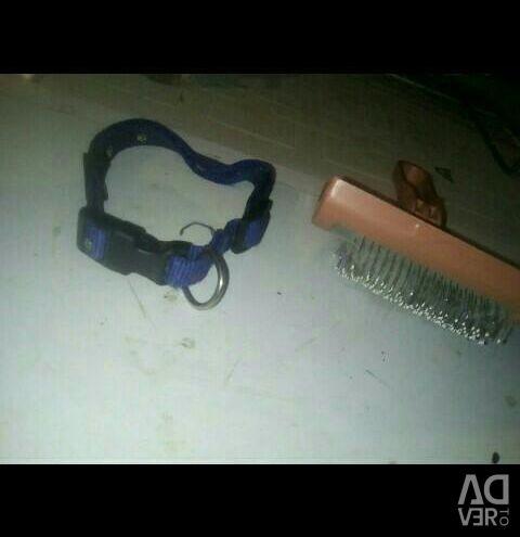 Collar for indoor