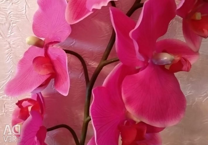 Artificial flowers - orchid and snag