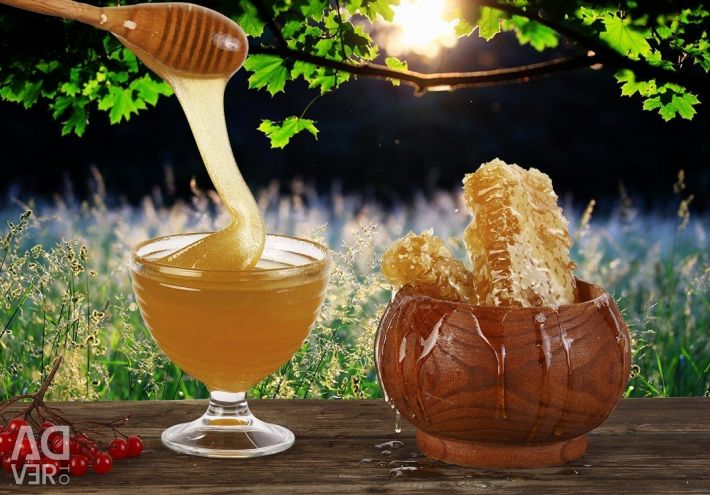 The Hottest Honey 2018