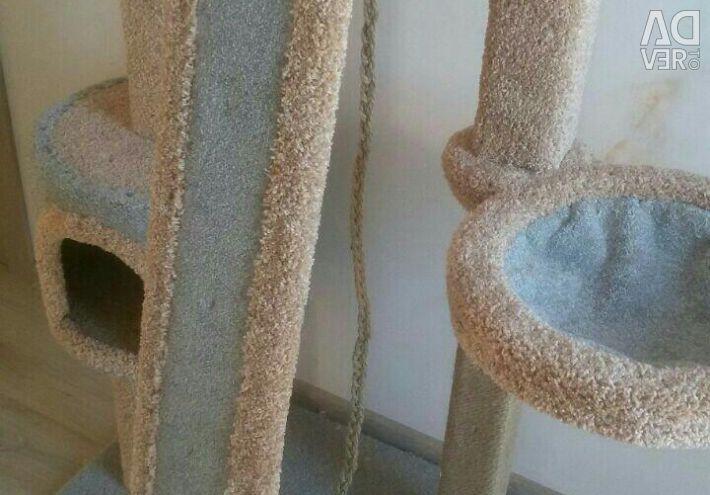 Kittens, cat lodge