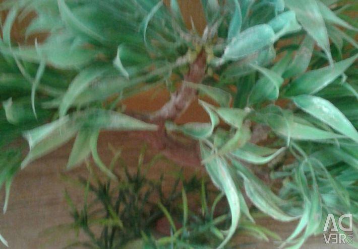 Artificial plant for aqua or terrarium