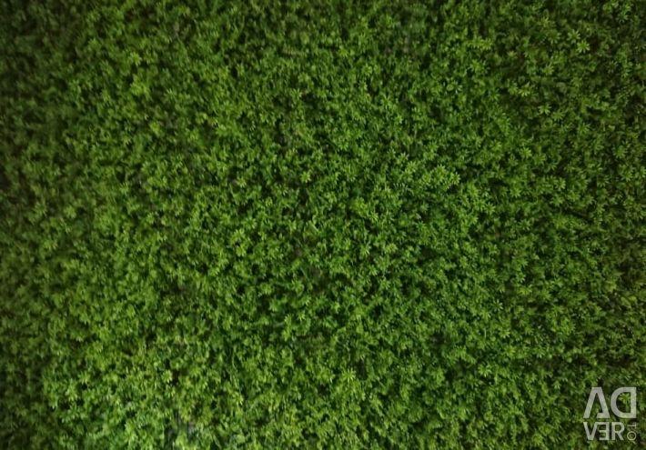 Коврики зелени