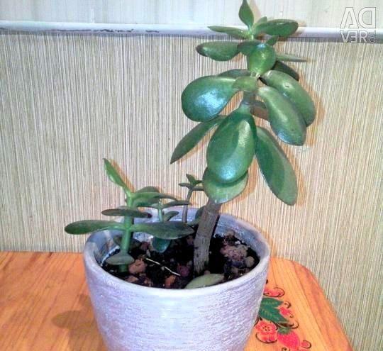 Arborele de bani (plin, rosu)