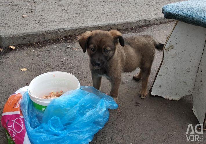 Puppy, 1.5 months.