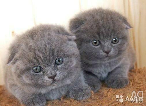 Lucky kittens