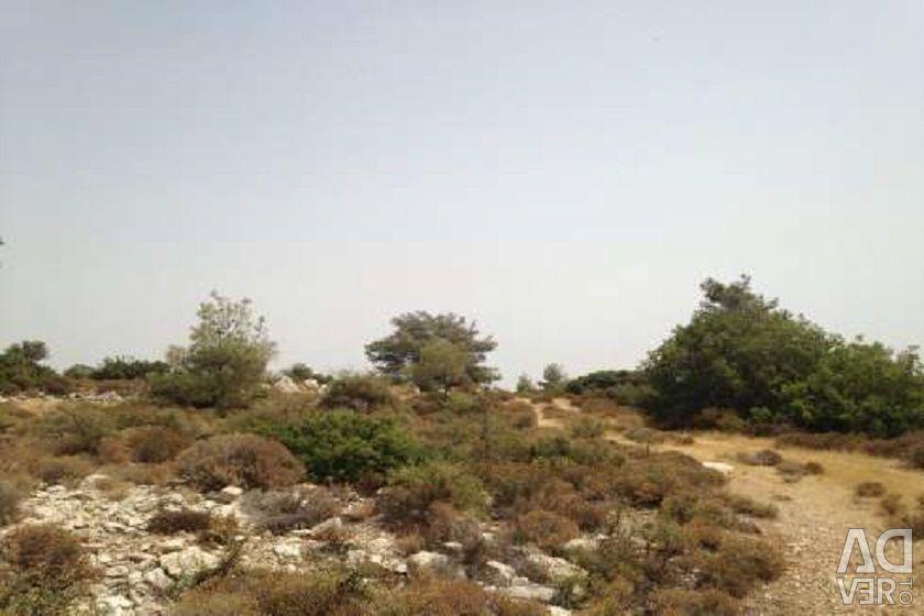 Field in Pano Kivides, Limassol