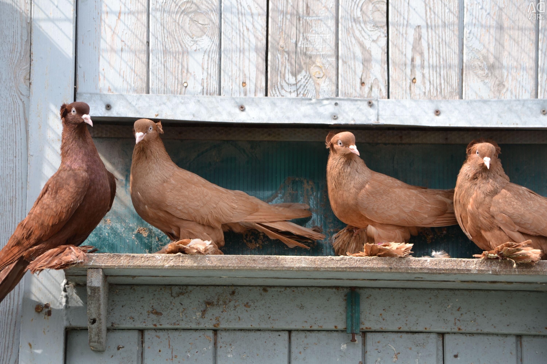 памяти погибших бойные голуби оренбурга фото для